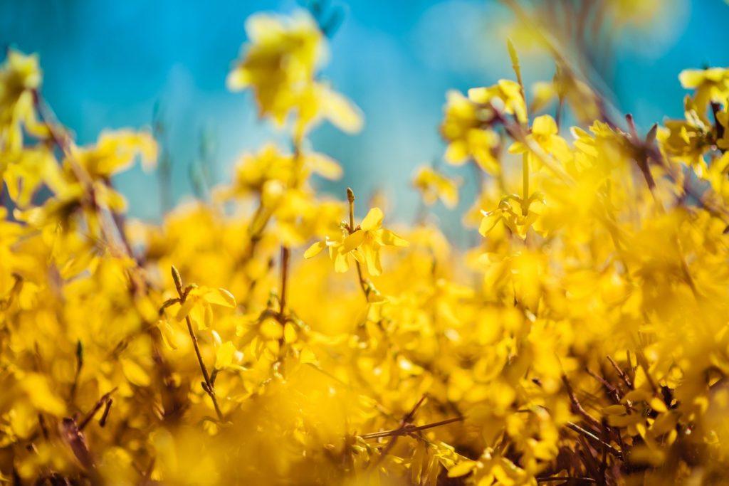 spring-4936511_1920